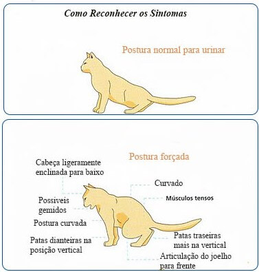 Trato urinario felino